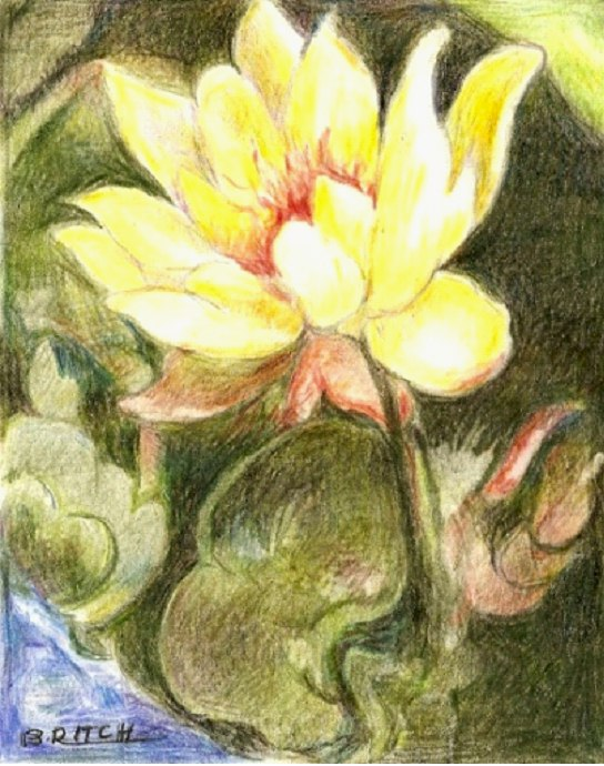 Pond Lily by Barbara Ritch