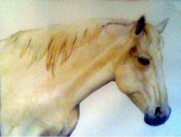 Horse, Camargue France - Watercolor by Penny Ritch