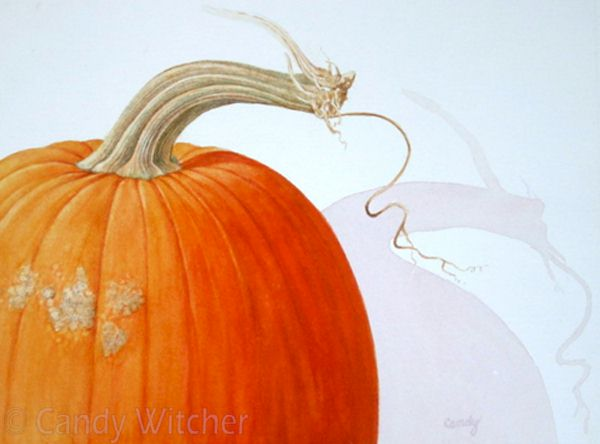 Pumpkin Stem VI by Candy Witcher