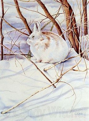 Snow Hare by Candy Witcher