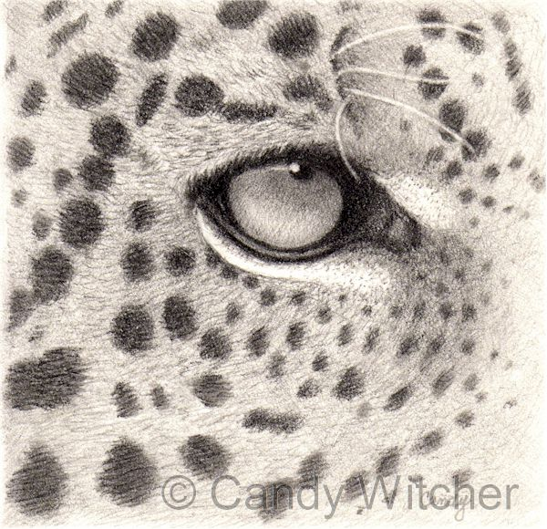 Leopard Eye by Candy Witcher
