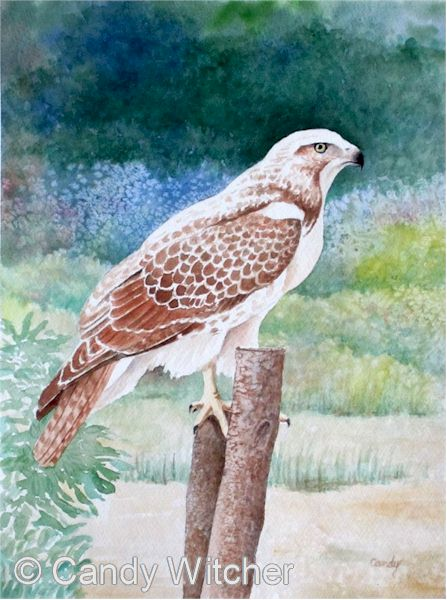 Hawk on a Post by Candy Witcher